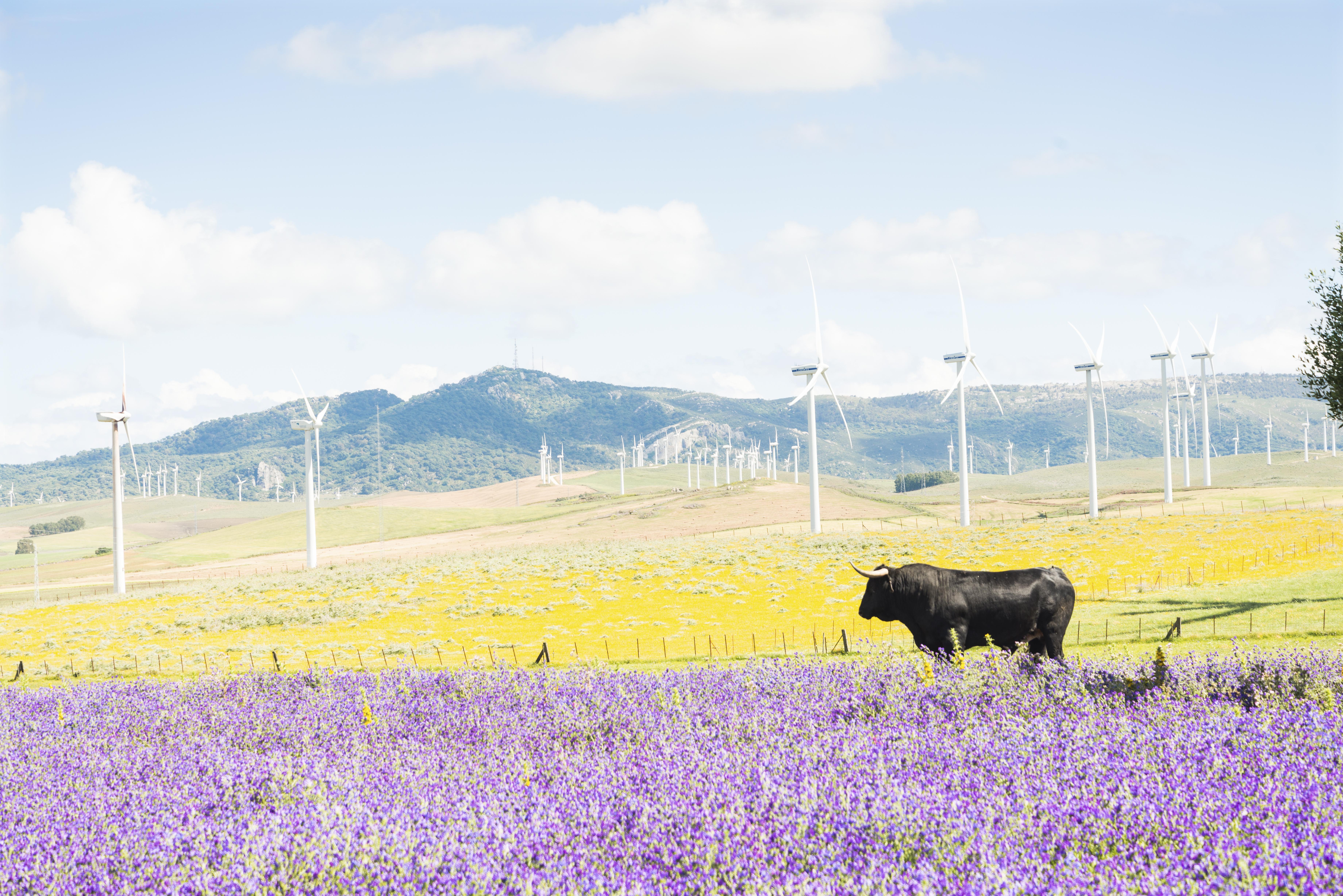 2010: bullish or bearish for energy markets?